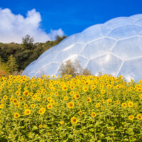 We provided energy consultancy to The Eden Project when the time came for them to renew their contracts.